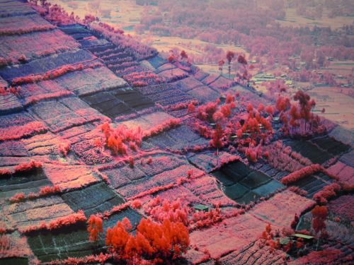 The Enclave di Richard Mosse, Padiglione Irlanda